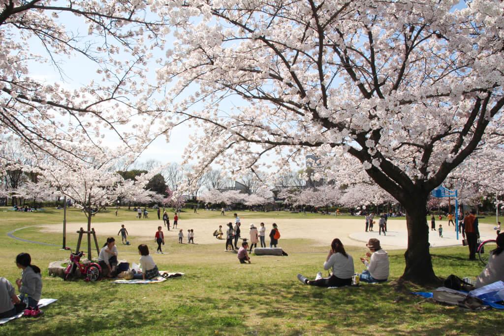 桜 (8 – 25)