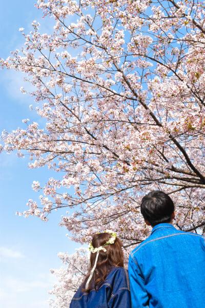 桜 (22 – 25)
