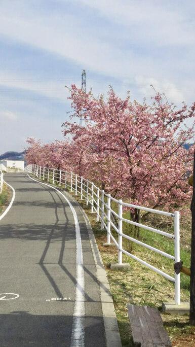 桜 (16 – 25)