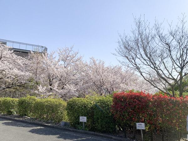 桜 (18 – 25)
