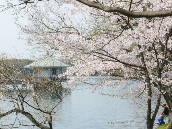 桜 (2 – 25)