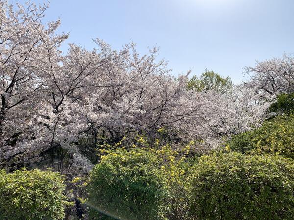 桜 (24 – 25)