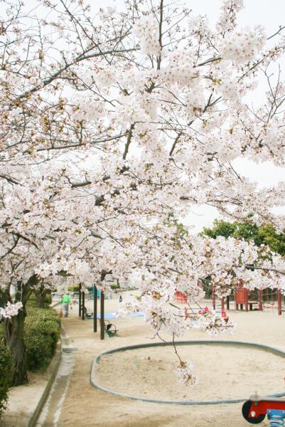 桜 (1 – 25)