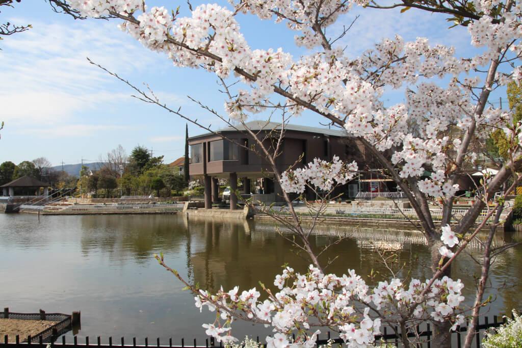 桜 (9 – 25)